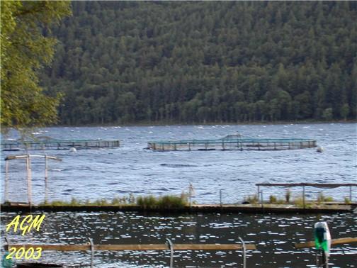 Loch Tay Fish Farm