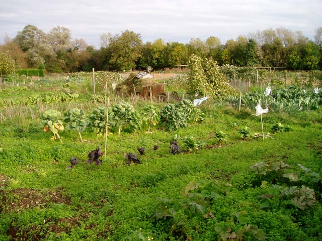 Allotments in Hauxton