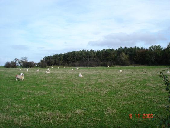 Sheep country near Denbigh