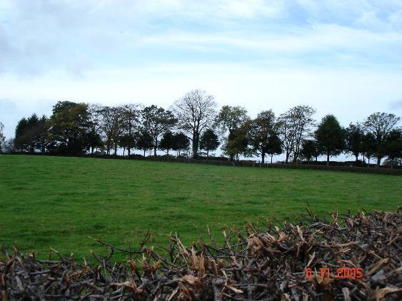 Fields near Waen