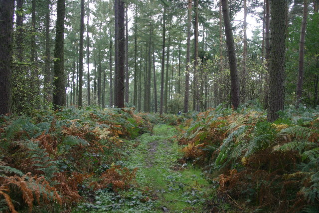 Bulmer Hag Woods
