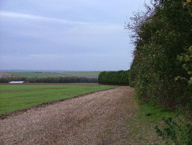 Bygrave Plantation and Gravelpit Hill