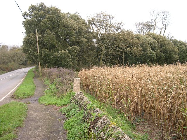A Field of Maize by the Roadside