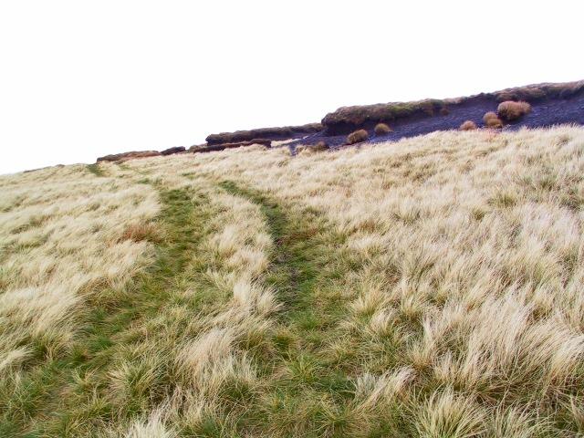 Westend Moss