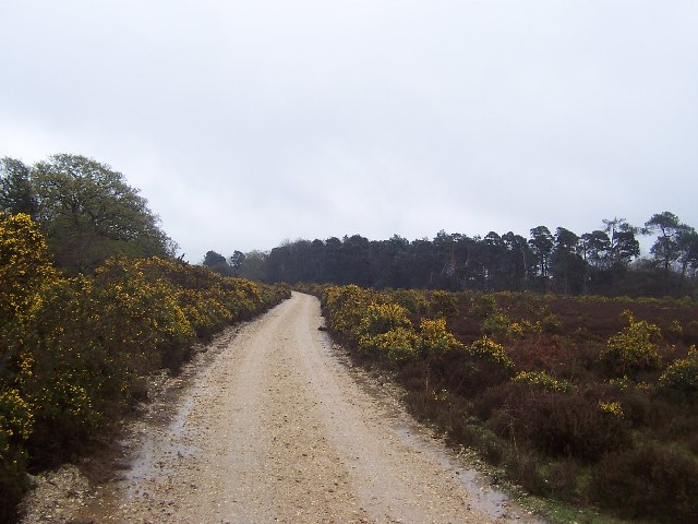 Approaching Amberwood Inclosure