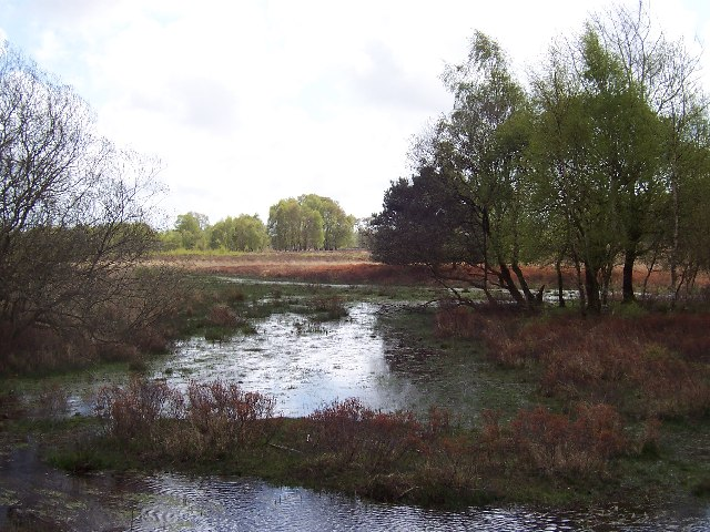 Bog and Marsh near Bishops Dyke