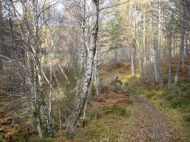 Path to Strathpeffer
