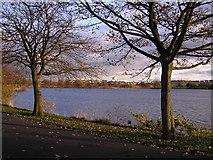 NS6467 : Hogganfield Loch by Chris Upson