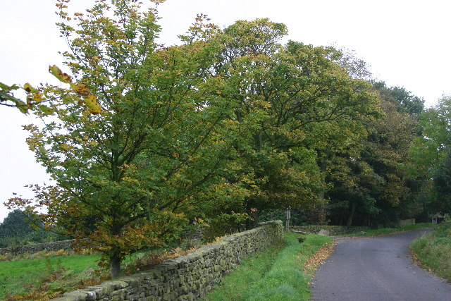 The Road from Muffles Bridge to Rosedale