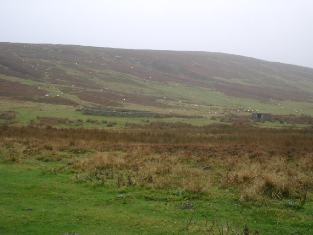 Sheepfank, Lammermuirs