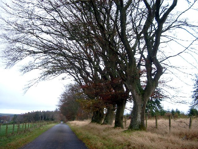 Roadside trees near Tank Wood