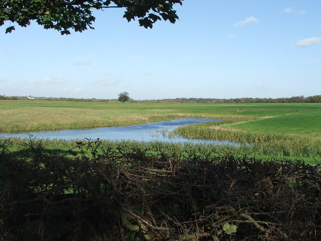 Pond on Back Lane.