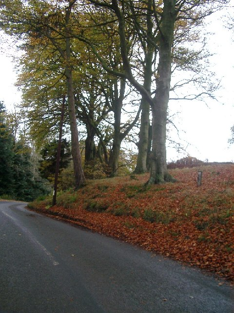Trees nr Windsheil