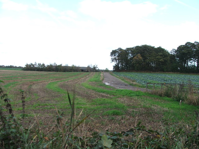 Green Lane Plantation.