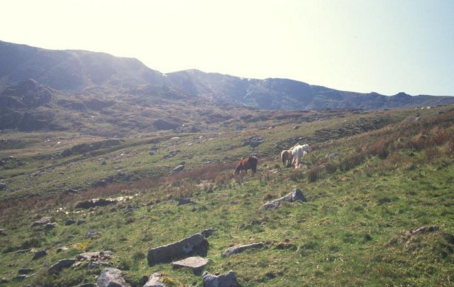 Ponies, Cwm Eigiau.