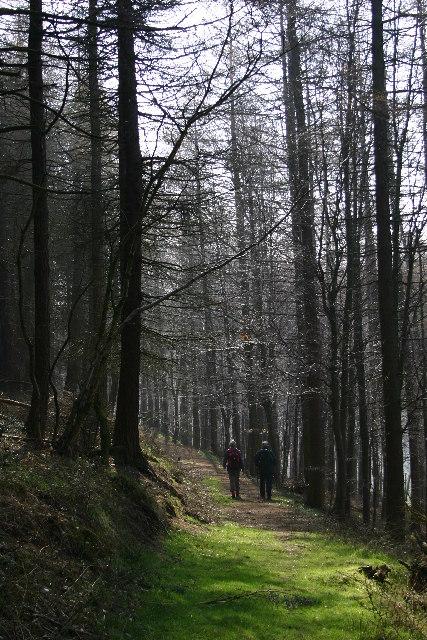 Nag's Head Wood