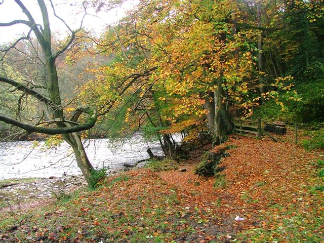 Billy Bank Wood, River Swale