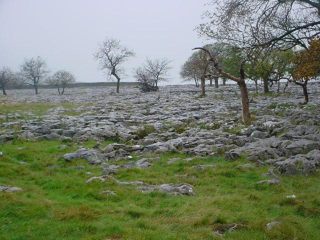 Scar Close Limestone Pavement, Ingleborough