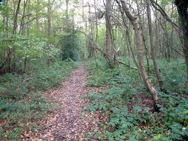 Footpath through Birches Croft, Knockholt TN14