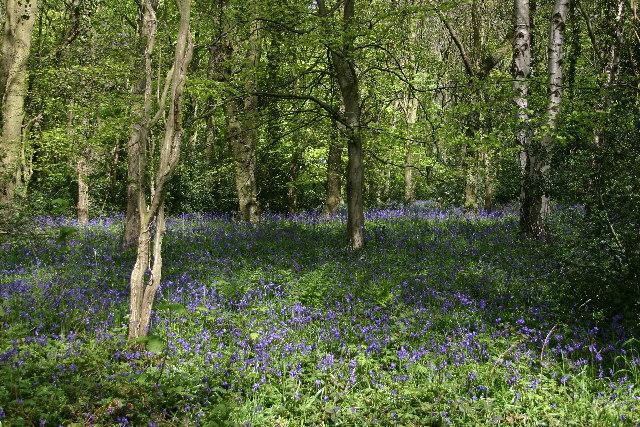 Bellburn Wood, near Binchester