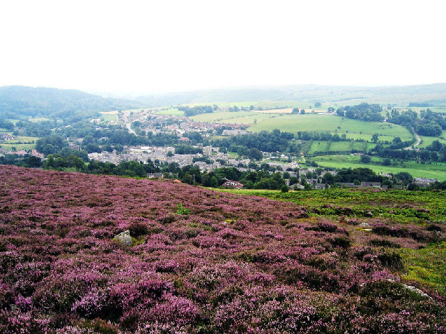 Heather on Addycombe hill above Rothbury