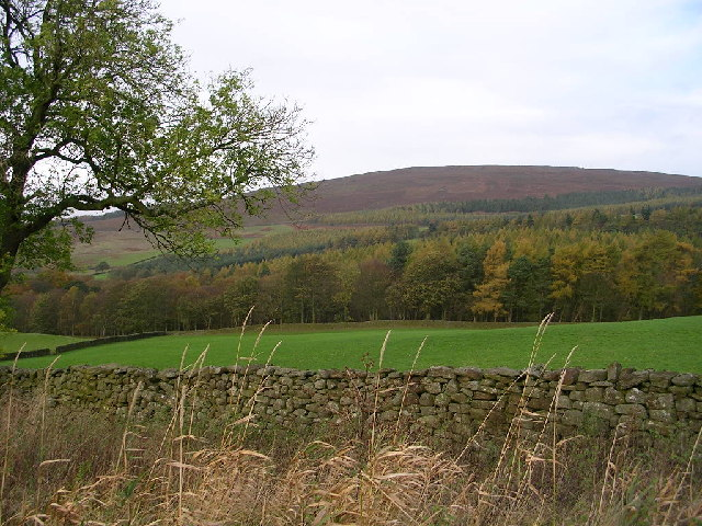 View towards Strid Wood & Barden Fell