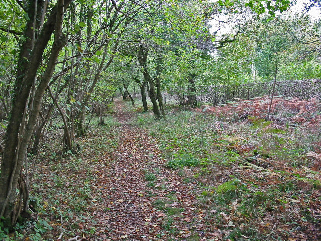 Woodland path in Hoe coppice, Sixpenny Handley
