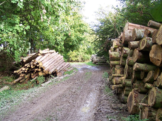 Felled Timber, Rowborough Bottom