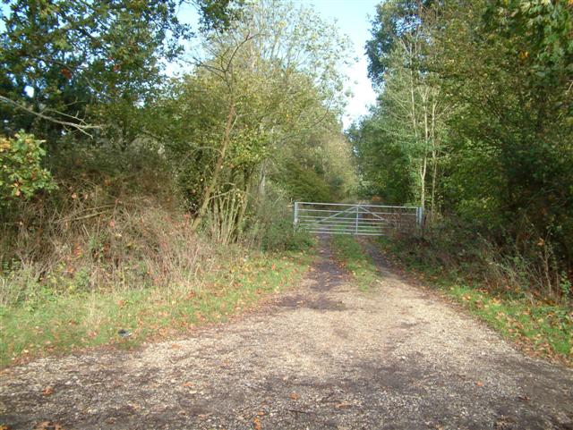The track through Monk Sherborne woods