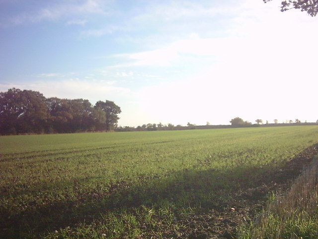 Sibton Arable Field in November