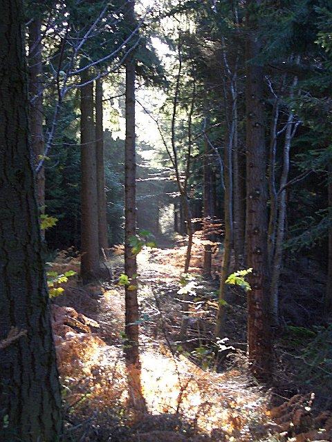 Saltoun Forest