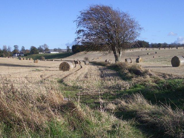 Fields by Newton Hall