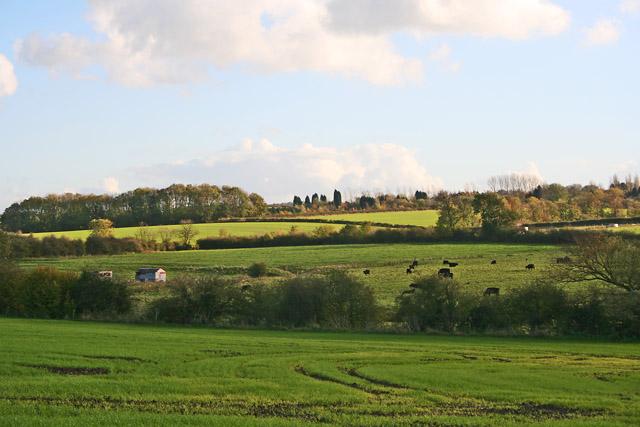 Farmland near Scraptoft