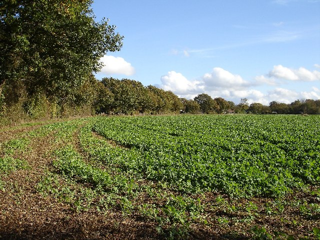 Field beside Gravelly Bottom Road
