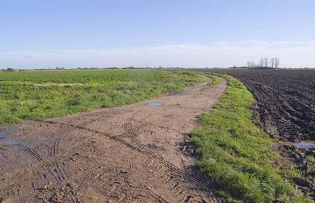 Farm track off Fen Road, looking across Holbeach Fen