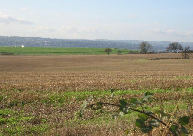 Fields, Crombie.