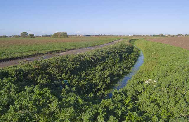 Drainage ditch off Thorpe's Lane, looking north towards Whaplode