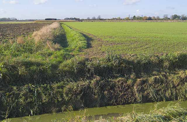 Ditches off Delgate Bank, Weston Hills, looking W