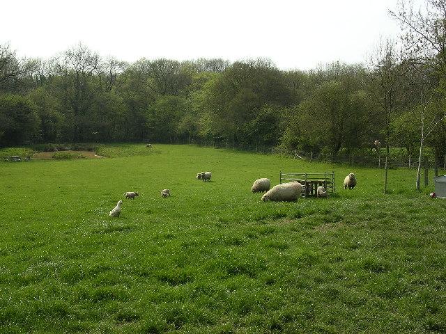 grazing animals on the village fringe