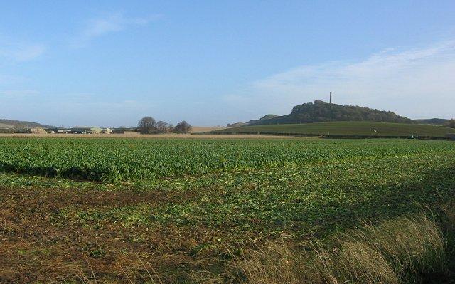 Turnip field, Byres.