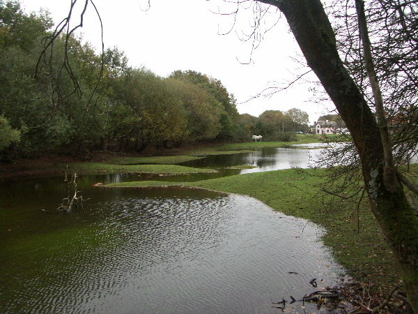 Pond at Pilley Bailey, New Forest National Park, Hants