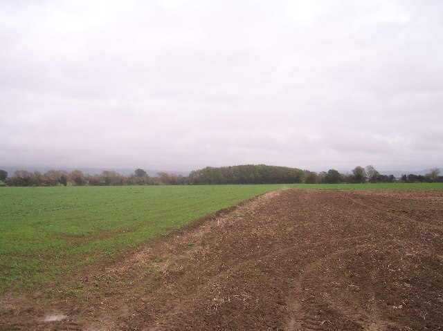 Fields near Piff's Elm