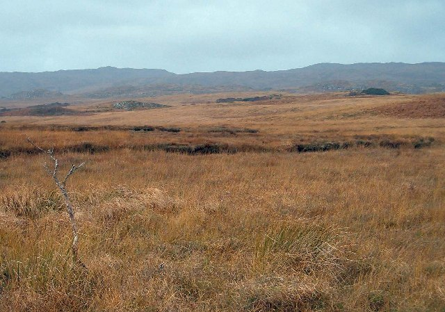 Peat bog at Coille nam Bruach, Isle of Islay