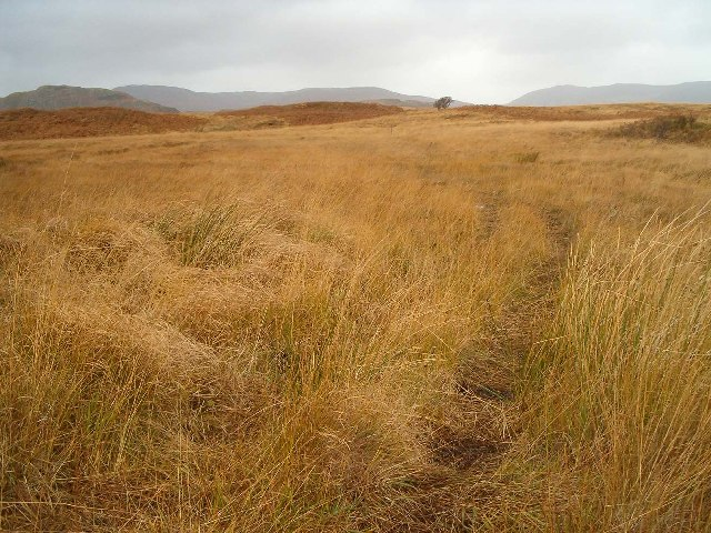 Track across Peat Bog, Coille nam Bruach, Isle of Islay