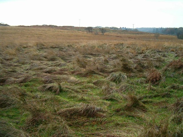 Moorland near Ardilistry, Isle of Islay