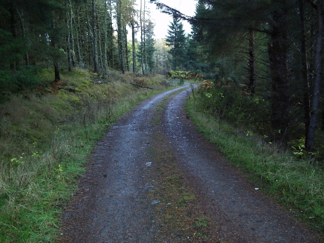 A Forestry Road in Gruids Wood