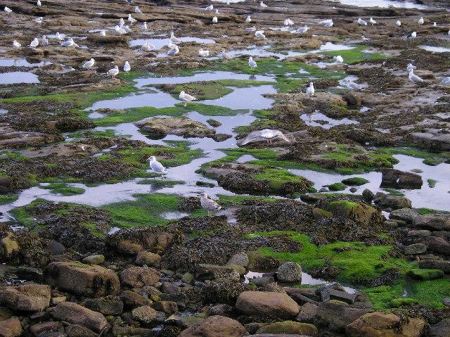 Seahouses/seagulls