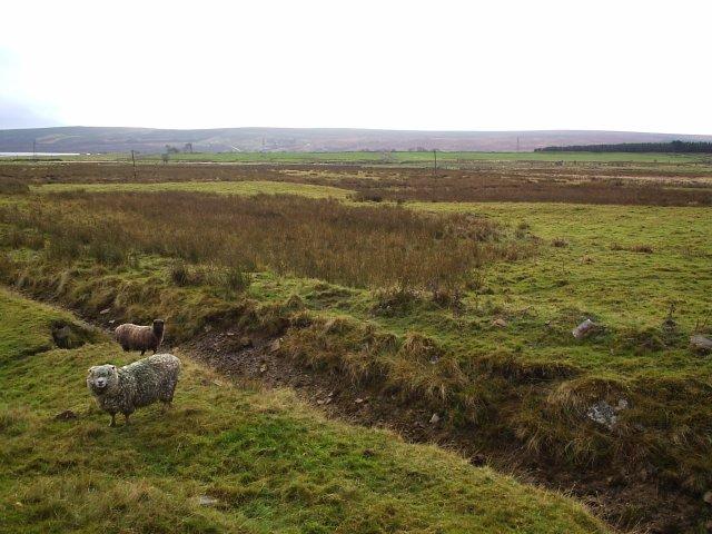 Croft Land  at Tirryside