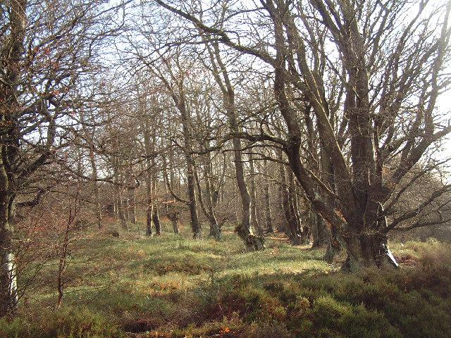 Hamsterley Forest, Beech Tree Plantation