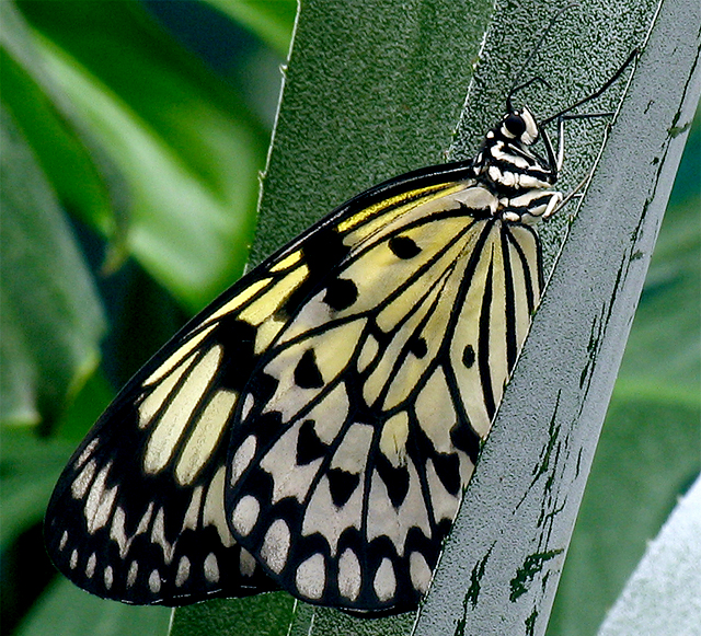 Rain Forest Butterfly